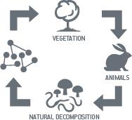 Biological Metabolism